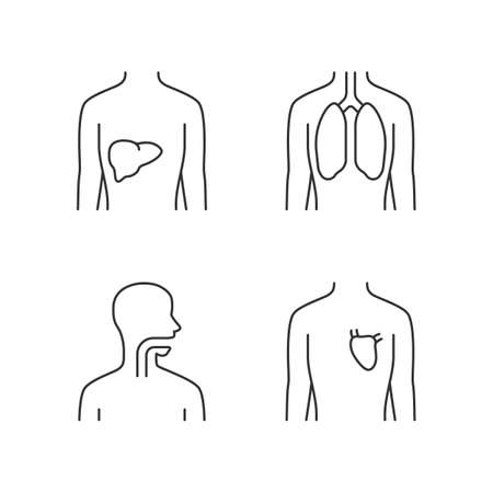 Healthy human organs linear icons set. Liver and lungs in good health. Functioning heart. Wholesome throat. Thin line contour symbols. Isolated vector outline illustrations. Editable stroke