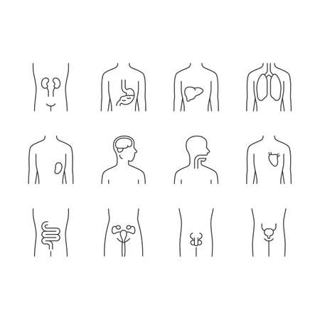 Healthy human organs linear icons set. Throat and lungs in good health. Functioning heart and urinary bladder. Thin line contour symbols. Isolated vector outline illustrations. Editable stroke Illustration
