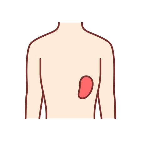 Healthy spleen color icon. Human organ in good health. People wellness. Functioning lymphatic system. Internal body part in good shape. Wholesome immune system. Isolated vector illustration
