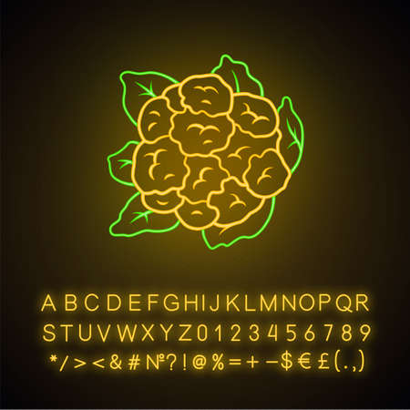 Cauliflower neon light icon. Cabbage. Agriculture plant. Salad ingredient. Vegetable farm. Vegan nutrition. Organic food. Glowing sign with alphabet, numbers and symbols. Vector isolated illustration Ilustração