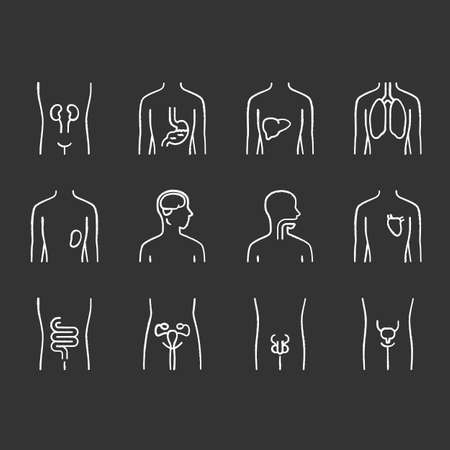 Healthy human organs chalk icons set. Intestines and urinary bladder in good health. Functioning men and women reproductive systems. Body parts in good shape. Isolated vector chalkboard illustrations Illustration