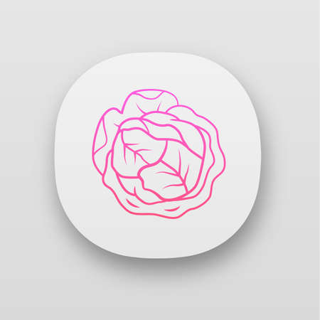 Cabbage app icon. Agriculture plant. Salad ingredient. Greenery. Vitamin. Healthy food. Vegan diet. Vegetable farm. UIUX user interface. Web or mobile applications. Vector isolated illustrations