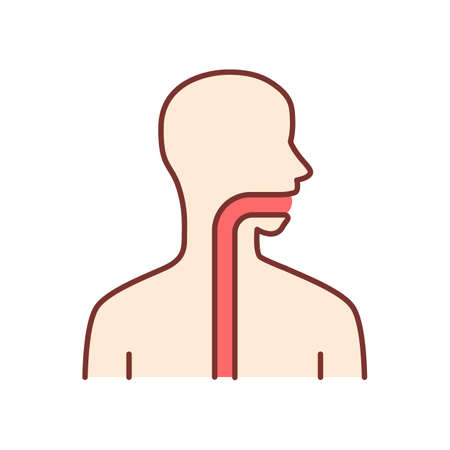 Healthy throat color icon. Oral cavity, pharynx and esophagus in good health. Upper section of alimentary canal. Internal body part in good shape. Gastrointestinal tract. Isolated vector illustration