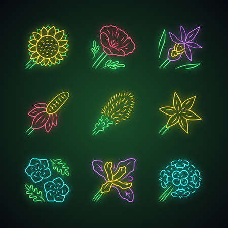 Wild flowers neon light icons set. Helianthus, california poppy, calypso orchid, liatris, common star lily, blue eyes, douglas iris, franciscan wallflower. Glowing signs. Vector isolated illustrations