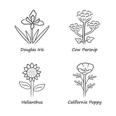 Wild flowers linear icons set. Douglas iris, cow parsnip, helianthus, california poppy. Blooming wildflowers, weed. Field, meadow plants. Thin line contour symbols. Isolated outline illustrations