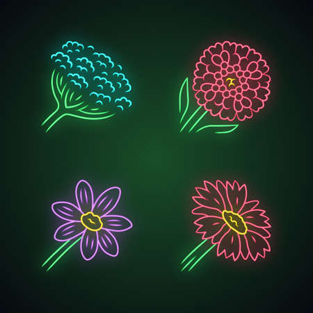 Wild flowers neon light icons set. Cow parsnip, candytuft, coreopsis, blanket flower. Blooming wildflowers, weed. Field, meadow herbaceous plants. Glowing signs. Vector isolated illustrations Illusztráció