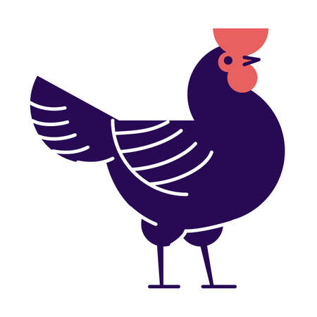 Rooster flat vector illustration. Dark blue cock isolated on white background. Poultry farm, hennery cartoon logo.  Domestic bird breeding, chicken meat production design element with outline