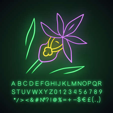 Calypso orchid neon light icon. Exotic, tropical blooming flower. Fairy slipper. Calypso bulbosa. Wildflower paphiopedilum. Spring blossom. Glowing alphabet, numbers. Vector isolated illustration Illusztráció
