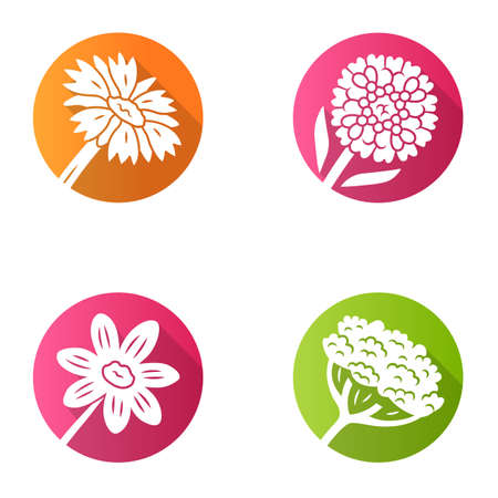 Wild flowers flat design long shadow glyph icons set. Cow parsnip, candytuft, coreopsis, blanket flower. Blooming wildflowers, weed. Spring blossom. Field, meadow plant. Vector silhouette illustration