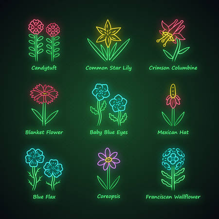 Wild flowers neon light icons set. Candytuft, common star lily, crimson columbine, blue eye, linum, coreopsis, franciscan wallflower. Wildflowers, weed. Glowing signs. Vector isolated illustrations