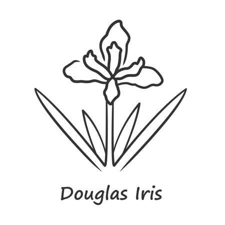 Douglas iris plant linear icon. California blooming wildflower with name inscription. Garden flower, weed. Iris douglasiana inflorescence. Thin line illustration. Vector isolated outline drawing Иллюстрация