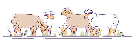 Flock of sheeps on pasture flat vector illustration. Livestock farming, animal husbandry cartoon concept with outline. Ewes grazing. Sheep wool and lamb meat production isolated design element