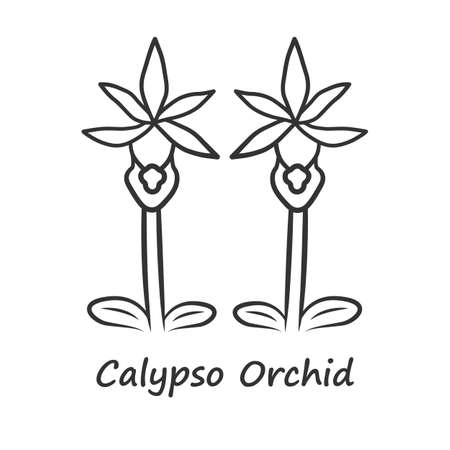 Calypso orchid linear icon. Thin line illustration. Exotic, tropical blooming flower. Fairy slipper with name. Calypso bulbosa. Wildflower paphiopedilum. Contour vector isolated outline drawing