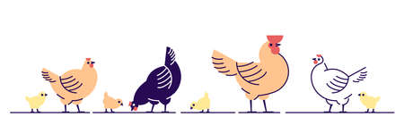 Chickens flat vector illustration. Multicolor chicks, hens and and rooster cartoon isolated design elements with outline. Chicken meat production, bird breeding. Poultry farm, animal husbandry