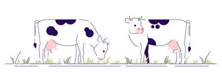 Cows on pasture flat vector illustration. Livestock, cattle farming, animal husbandry design element with outline. Dairy farm. Cartoon spotted cows grazing in field isolated on white background