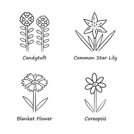 Wild flowers linear icons set. Candytuft, common star lily, coreopsis, blanket flower. Blooming wildflower, weed. Field, meadow plants. Thin line contour symbols. Isolated vector outline illustrations