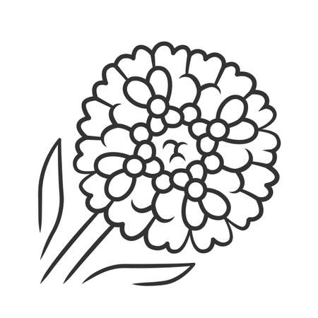 Candytuft linear icon. Aster garden flower. Iberis evergreen perennial plant. Blooming wildflower. Spring blossom. Thin line illustration. Contour symbol. Vector isolated outline drawing Ilustração