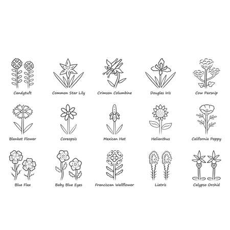 Wild flowers linear icons set. Spring blossom. California wildflowers with names. Garden blooming plants inflorescences. Botanical bundle. Thin line contour symbols. Isolated vector illustrations