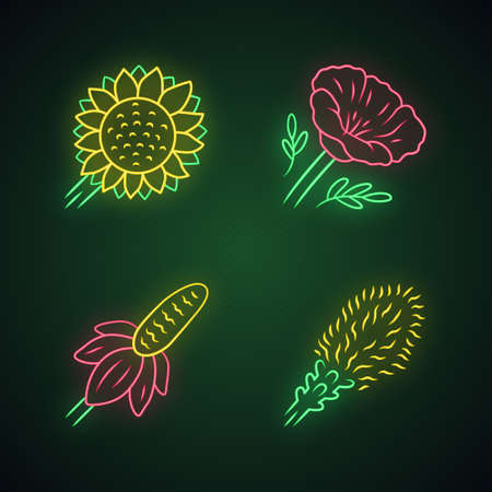Wild flowers neon light icons set. Helianthus, California poppy, mexican hat, liatris. Blooming wildflowers, weed. Field, meadow flowering plants. Glowing signs. Vector isolated illustrations