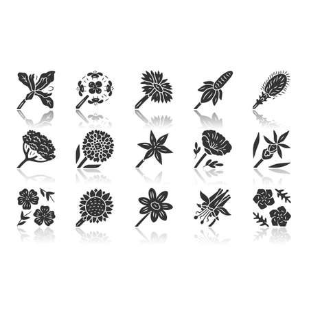 Wild flowers drop shadow black glyph icons set. Spring blossom. California wildflowers. Garden blooming plants, weed. Botanical bundle. Meadow and field flowers. Isolated vector illustrations Ilustração