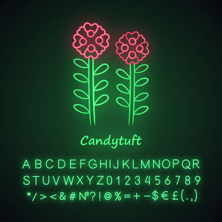 Candytuft neon light icon. Aster garden flower with name inscription. Iberis evergreen perennial plant inflorescence. Blooming wildflower. Glowing alphabet, numbers. Vector isolated illustration