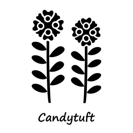 Candytuft glyph icon. Aster garden flower with name inscription. Iberis evergreen perennial plant inflorescence. Blooming wildflower. Silhouette symbol. Negative space. Vector isolated illustration Ilustração