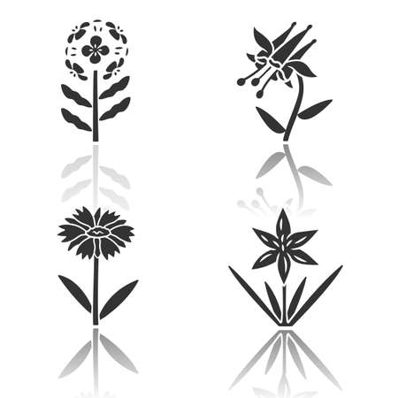 Wild flowers drop shadow black glyph icons set. Franciscan wallflower, crimson columbine, common star lily, blanket flower. Blooming wildflowers, weed. Field plants. Isolated vector illustrations Ilustrace