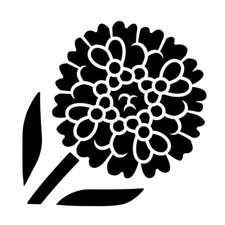 Candytuft glyph icon. Aster garden flower. Iberis evergreen perennial plant. Blooming wildflower. Spring blossom. Silhouette symbol. Negative space. Vector isolated illustration