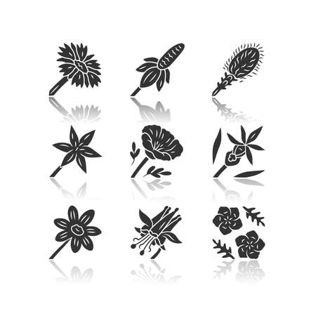 Wild flowers drop shadow black glyph icons set. Mexican hat, liatris, common star lily, poppy, calypso orchid, coreopsis, crimson columbine, blue flax, blanket flower. Isolated vector illustrations Ilustração