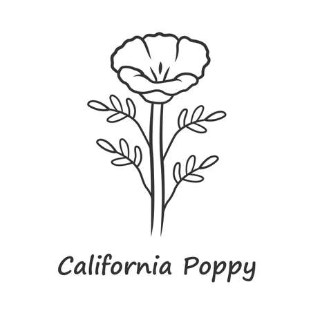 California poppy linear icon. Papaver rhoeas with name inscription. Corn rose wildflower. Herbaceous plants. Field common poppy. Thin line illustration. Contour symbol. Vector isolated outline drawing