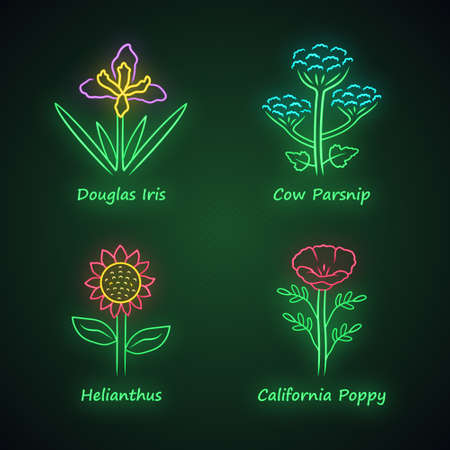 Wild flowers neon light icons set. Douglas iris, cow parsnip, helianthus, california poppy. Blooming wildflowers. Spring blossom. Field, meadow plants. Glowing signs. Vector isolated illustrations