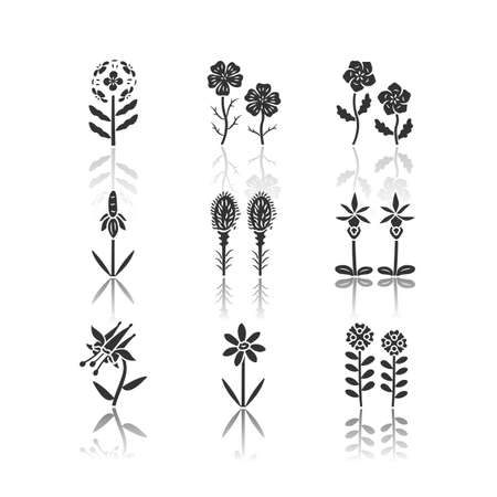 Wild flowers drop shadow black glyph icons set. Franciscan wallflower, linum, blue eyes, mexican hat, liatris, calypso orchid, crimson columbine, coreopsis, candytuft. Isolated vector illustrations
