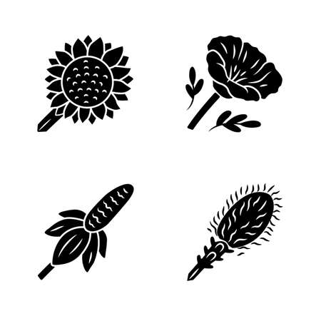 Wild flowers glyph icons set. Helianthus, California poppy, mexican hat, liatris. Blooming wildflowers, weed. Calflora. Spring blossom. Silhouette symbols. Vector isolated illustration