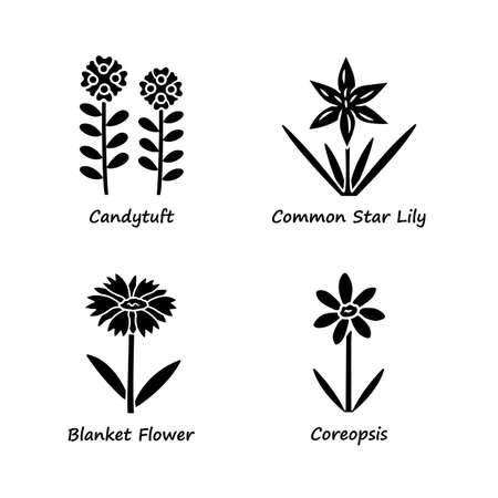 Wild flowers glyph icons set. Candytuft, common star lily, coreopsis, blanket flower. Blooming wildflowers, weed. Field, meadow herbaceous plants. Silhouette symbols. Vector isolated illustration Ilustração