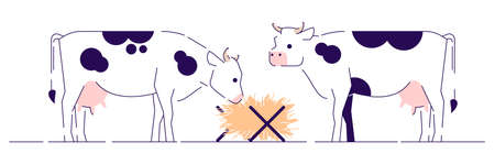 Cows feeding flat vector illustration. Cattle farming, animal husbandry and breeding cartoon concept with outline. Dairy farm. White cows with black spots eating hay side view isolated on white