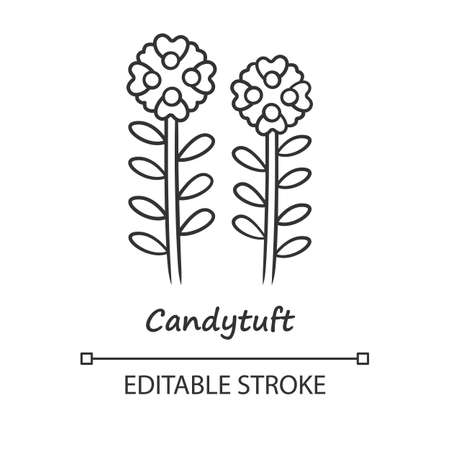 Candytuft linear icon. Thin line illustration. Aster garden flower with name inscription. Iberis evergreen plant. Blooming wildflower. Contour symbol. Vector isolated outline drawing. Editable stroke Ilustração