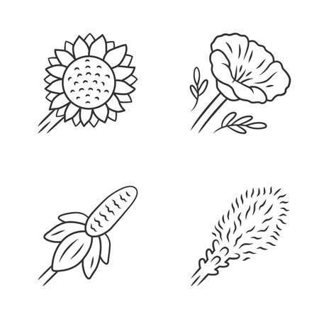 Wild flowers linear icons set. Helianthus, California poppy, mexican hat, liatris. Blooming wildflowers, weed. Calflora. Spring blossom. Thin line contour symbols. Isolated vector outline illustration