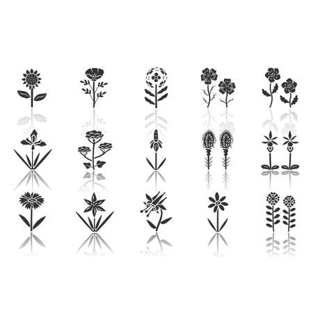 Wild flowers drop shadow black glyph icons set. Spring blossom. California wildflowers, weed with names. Garden blooming plants inflorescences. Botanical bundle. Isolated vector illustrations Ilustrace