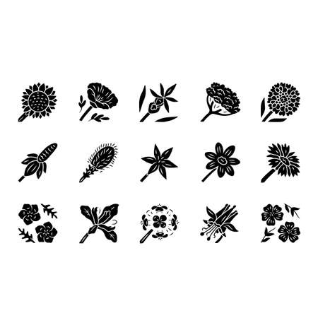 Wild flowers glyph icons set. Spring blossom. California wildflowers. Garden blooming plants. Botanical bundle. Meadow, field flowers, weed. Calflora. Silhouette symbols. Vector isolated illustration