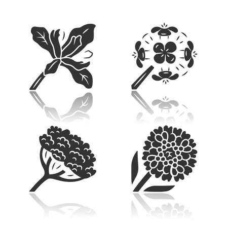Wild flowers drop shadow black glyph icons set. Douglas iris, franciscan wallflower, cow parsnip, candytuft. Blooming wildflowers, weed. Field, meadow herbaceous plants. Isolated vector illustrations