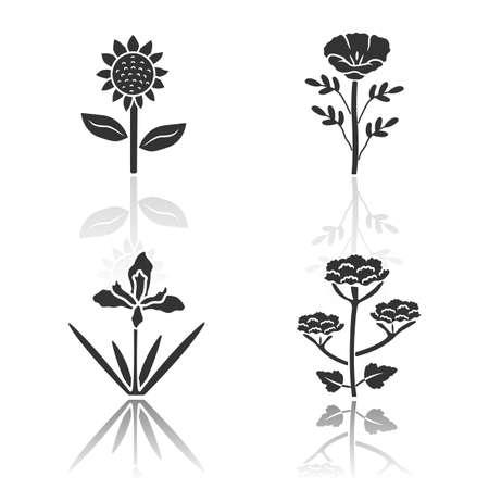 Wild flowers drop shadow black glyph icons set. Helianthus, california poppy, douglas iris, cow parsnip. Blooming wildflowers, weed. Field, meadow herbaceous plants. Isolated vector illustrations Ilustração