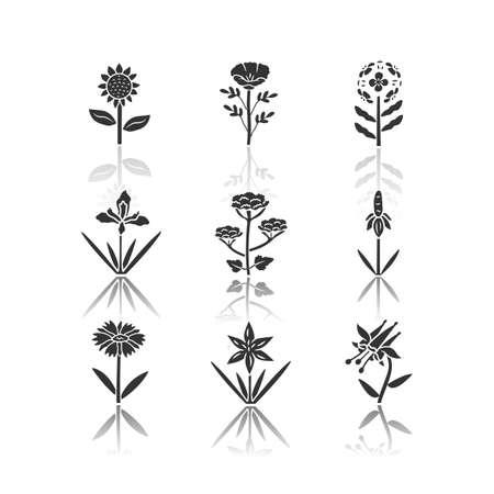 Wild flowers drop shadow black glyph icons set. Helianthus, california poppy, franciscan wallflower, douglas iris, cow parsnip, crimson columbine, blanket flower. Isolated vector illustrations Illustration