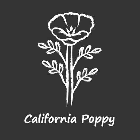 California poppy chalk icon. Papaver rhoeas with name inscription. Corn rose blooming wildflower. Herbaceous plants. Field common poppy. Summer blossom. Isolated vector chalkboard illustration
