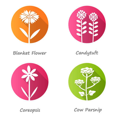 Wild flowers flat design long shadow glyph icons set. Coreopsis, cow parsnip, candytuft, blanket flower. Blooming wildflowers, field weed with name inscription. Vector silhouette illustration Çizim