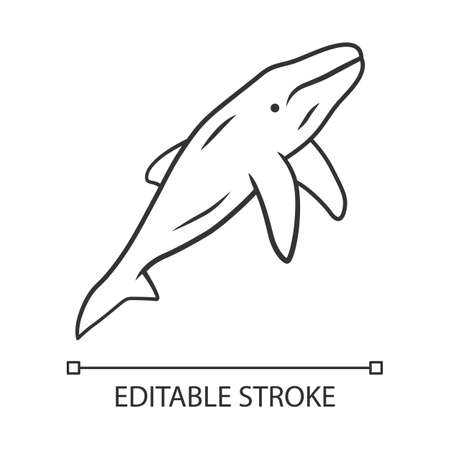 Whale linear icon. Marine mammal. Ocean predator. Aquatic animal, wildlife nature. Zoology and oceanography. Thin line illustration. Contour symbol. Vector isolated outline drawing. Editable stroke