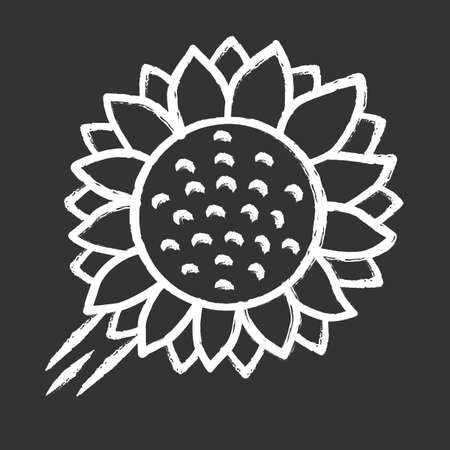 Helianthus chalk icon. Sunflower head. Field blooming flower. Agriculture symbol. Wild plant. Summer blossom. Isolated vector chalkboard illustration Illustration