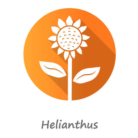 Helianthus orange flat design long shadow glyph icon. Sunflower head with name inscription. Field blooming flower. Agriculture symbol. Wild plant summer blossom. Vector silhouette illustration Illustration