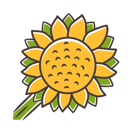 Helianthus yellow color icon. Sunflower head. Field blooming flower. Agriculture symbol. Wild plant. Summer blossom. Isolated vector illustration