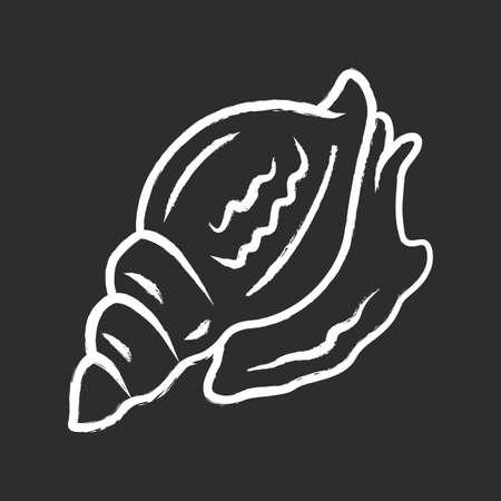 Triton chalk icon. Large mollusk with spiral shell. Tropical seashell. Sea snail. Underwater world inhabitant. Predatory aquatic mollusk. Marine creature. Isolated vector chalkboard illustration