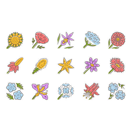 Wild flowers color icons set. Spring blossom. California wildflowers. Garden decorative blooming plants. Botanical bundle. Meadow and field flowers, weed. Isolated vector illustrations Illustration